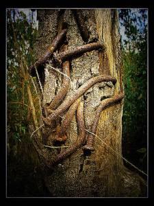 אשר גיבל נגיעות של רוע, יער אוסישקין