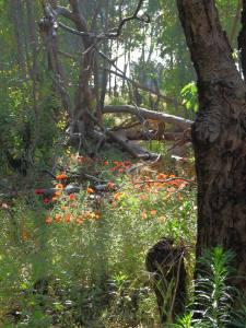 אשר גיבל, יער אוסישקין, 2010