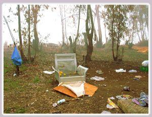אשר גיבל, דצמבר 2005 יער אוסישקין