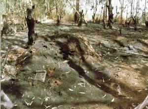 אשר גיבל, יער אוסישקין בשחור לבן