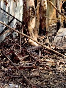 אשר גיבל, יער אושישקין, 2004