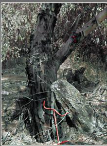 אשר גיבל, עץ ביער אוסישקין , טבעו של הרוע דומה להכשת נחש , ברגע ההכשה אתה נמצא בהלם ולא מרגיש כאב...