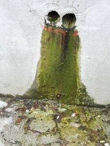 דליה גבריאלי נורי, כלולות או מה אומרים אזובי הקיר, ניקוז וטחב בשנקין